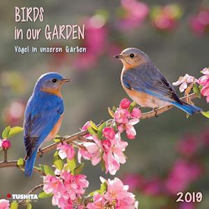 Birds in Our Garden 2019
