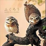 Beautiful Owls in the World