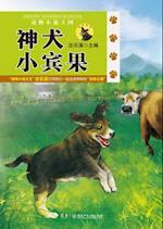 Animal Novel Kingdom - Pasturing Area A* Dog Bingo