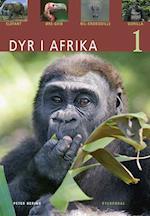Dyr i Afrika. Elefant, øregrib, nilkrokodille, gorilla (Dyr)