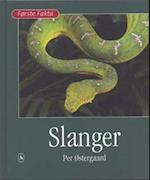 Slanger (Første fakta)
