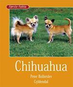Chihuahua (Første fakta)