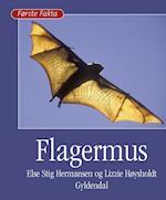 Flagermus (Første fakta)