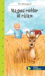 Magnus redder et rålam (Lille Dingo)