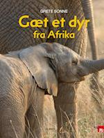 Gæt et dyr fra Afrika