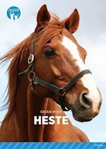 Heste (Fagklub)