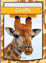 Giraffe (Easy reading just for you My first book)
