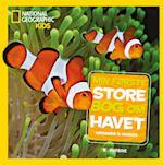 Min første store bog om havet (National Geographic Kids)