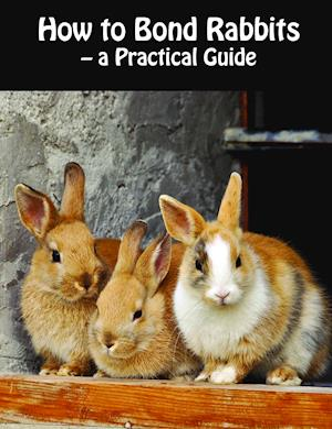 Bog, hæftet How to bond rabbits af Rebekka Faial