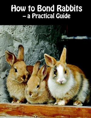 How to bond rabbits