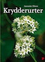 Krydderurter