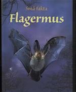 Flagermus (Små fakta)