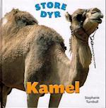 Kamel (Store dyr)
