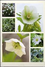 Blomsterkort - juleroser og påskeklokker