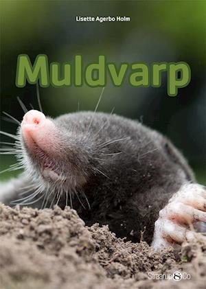 Muldvarp