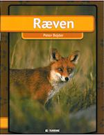 Ræven (Min første bog)