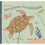Den grønne havskildpadde