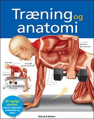 Bog, hæftet Træning og anatomi af Ken Ashwell
