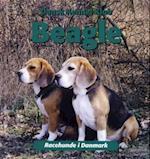 Beagle (Racehunde i Danmark)
