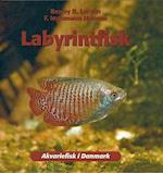 Labyrintfisk (Akvariefisk i Danmark)