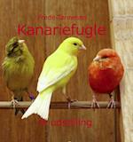 Kanariefugle - til udstilling