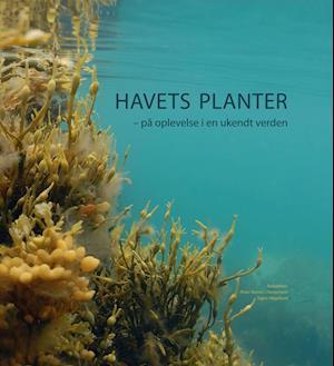 Havets planter