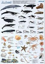 Havpattedyr og smådyr i havet