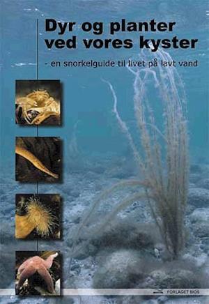 Bog hæftet Dyr og planter ved vores kyster af Dennis Lisbjerg