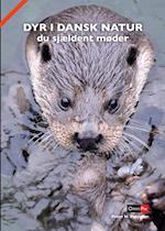 Dyr i dansk natur du sjældent møder
