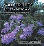Wild Orchids in Myanmar (nr. 1)