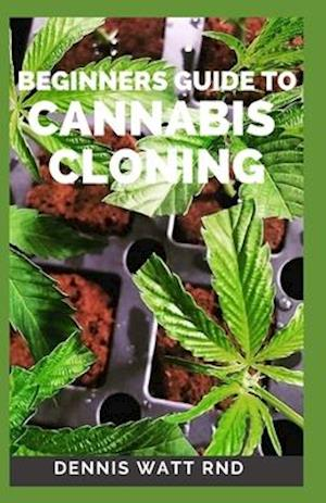 Beginners Guide to Cannabis Cloning Guide