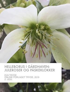 HELLEBORUS I GÅRDHAVEN: JULEROSER OG PÅSKEKLOKKER